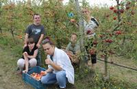 Klienti oberajú jablká
